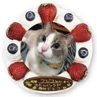 【今人気!】プリントデコレーションケーキ