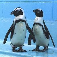 ペンギンがいるBar-リトルフィート-