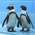 愛らしいペンギンたち♪