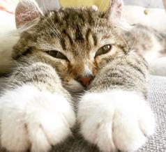猫カフェ 美観nekoの写真
