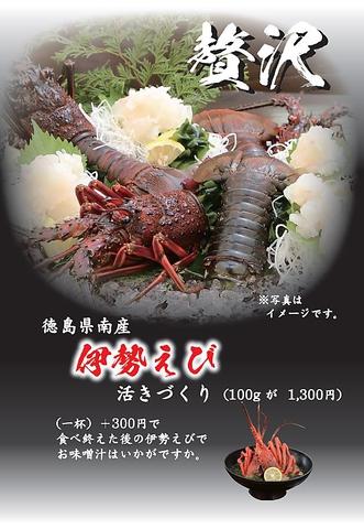 徳島県南産の『贅沢』伊勢海老の活づくり!!100g1300円で好評提供中♪