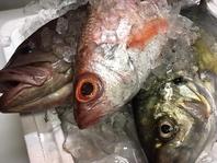 新鮮な魚を厳選!!