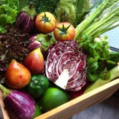マハロ MAHALO Vegetable Dining 天神大名のコース写真