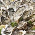 料理メニュー写真厚岸の生カキ