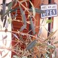 オリーブの木が出迎える温かいエントランス