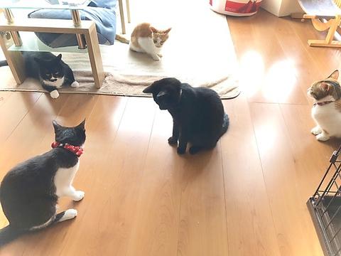 """""""保護猫カフェmoff moff"""""""