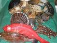 こだわりいっぱい!鮮度抜群の魚介が自慢★和味屋自慢の新鮮魚介!イキがよくとにかく美味しい!鮮度抜群で、旬のお魚は厚切りのお刺身で贅沢にどうぞ♪お刺身盛り合わせをご用意しております♪