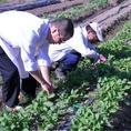 契約農家「いしうちの森」からの、朝獲り野菜をふんだんに使用♪