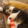 SAVE CAT CAFEのおすすめポイント2