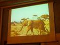 アフリカの秘蔵映像を流しています。