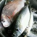 【大漁時にはお魚祭り】不定期ながら知り合い漁師から届く新鮮なお魚たち。大漁時にはお魚祭りを開催します!