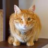 SAVE CAT CAFEのおすすめポイント3