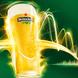 『ドラフトマスター』がいる、おいしいビールのお店★