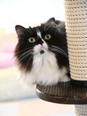 猫カフェ らぶねこの雰囲気2