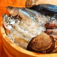 ぴっちぴちの鮮魚♪