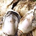 料理メニュー写真殻付き活き牡蠣