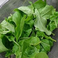 野菜にもこだわりあり!朝霞の朝採れ新鮮野菜を使用!