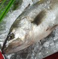 市場で直接買い付ける魚 鮮度に自信あり!