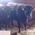 極僅かだけ肥育される江別市のブランド牛『えぞ但馬牛』。その幻の最高級黒毛和牛を契約牛舎で肥育し、自社管理のもと鮮度抜群の牛肉をレアステーキ等でご提供しています。その他厳選し仕入れる牛肉も鮮度にこだわっています。