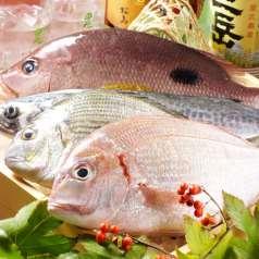 魚鮮水産 北千住東口店の特集写真