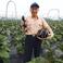 矢島さんはお茄子などを作られています。水や土にも徹底的に気を遣うこだわりよう。