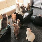 アニマルカフェ 猫の王様 埼玉のグルメ