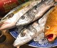 毎日瀬戸内の新鮮魚介が入ります!