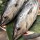 高知といえば鰹カツオかつお!!毎日新鮮な鰹を入荷しております。県外の方にもお勧めです。