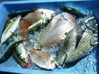 【東区で本物の海鮮を食べさせます】
