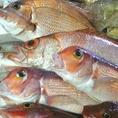 新潟の地魚も多数ご用意