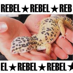 爬虫類Bar REBEL レボル