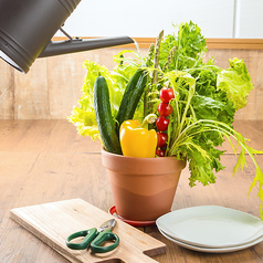 新鮮野菜の農家食堂 garden 新宿の写真