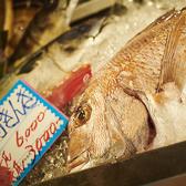 産地直送の旬の魚を召し上がれます!