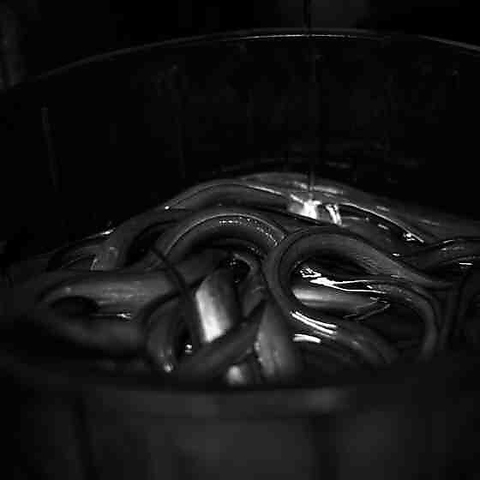 創業以来守り続けられてきた百年注ぎ足し一子相伝のタレと一本選りの鰻!