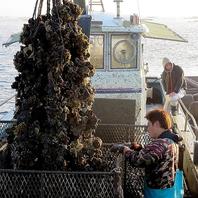 地元の水産業者から仕入れる新鮮な魚介を驚きの価格で!