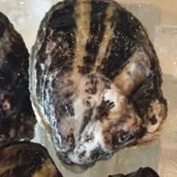 産地直送の新鮮な生牡蠣!