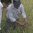 自慢の肉は最高のお米で頂く。これが農家の一服のこだわりです…