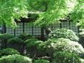 新緑がとても綺麗な、心地のいい空間です。