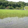 大分の山麓の新鮮な水で育った良質なお米を使用…