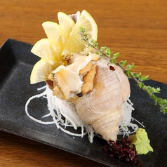 ツブ貝のお刺身 / イカのお刺身