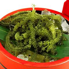 料理メニュー写真沖縄県産 海ぶどう