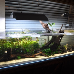 横幅230cm!!神戸発!!店頭にかまえる巨大水槽ではカワイイお魚たちが優雅に泳いでいます♪