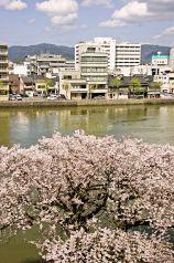 懐石 おもい川の写真