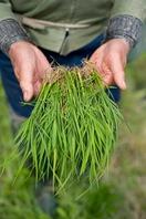 もつ鍋の野菜は契約農家から直送の新鮮な野菜を使用