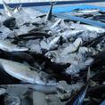 当店では、サバ博士が厳選しこだわり抜いた東北近海(八戸沖・三陸沖)で穫れる鯖を使用し、脂質含有量21%以上・魚体550g以上という基準をクリアしたエリートサバを「とろさば」と定めています。栄養価の高い鯖の効果効能を考慮し、個性豊かな料理を皆サバへご提供致します。