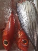 毎週仕入れを行う新鮮な魚