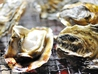 牡蠣小屋 網元 名古屋のおすすめポイント1