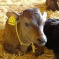 出産から立ち会い、長い年月をかけて丁寧に育てます。ストレスなく育った牛のお肉は格別の美味しさ