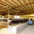 広々とした牛舎でのびのびと牛が育てられています