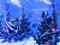 熱帯魚たちがお出迎え。